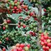 越南加强蔬菜产业发展降低对中国蔬菜等的依赖